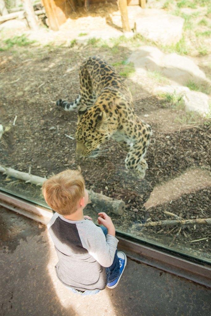 [small] Birthday Zoo Trip-10